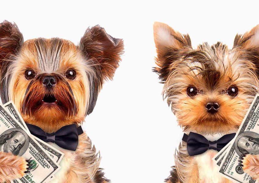 Controle Financeiro Incrível na minha Pet Shop