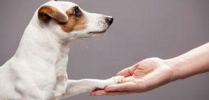 Franquia de pet shop: Quais são as vantagens?