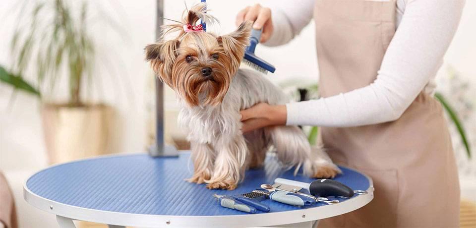 8641157c0 Banho e tosa a domicílio: como montar o seu | Pet Shop Control