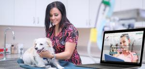 Software veterinário: Tudo que você precisa saber sobre