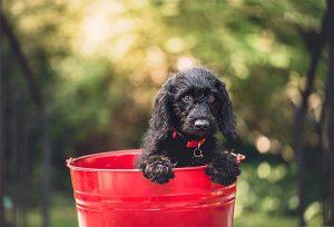 A curva ABC e o mercado de pet shops: foco na lucratividade