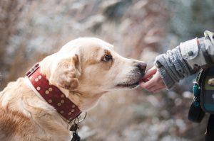 Comissão de Funcionários: como o Pet Shop Control ajuda