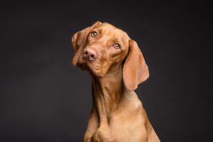 A importância da Gestão de Pet Shops: entenda os níveis de aplicação
