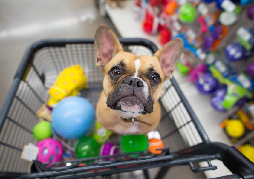 Produtos mais vendidos para pet shop