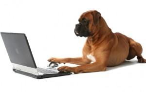 Tudo sobre pet shop: planejamento para acelerar o crescimento