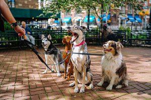 Consumidor moderno: atualização nos serviços da pet shop