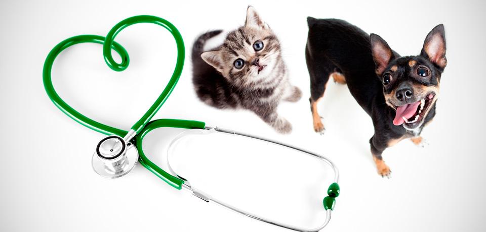 veterinário pet shop