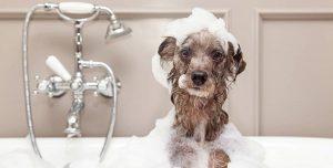 Equipamentos para pet shop: o checklist completo para seu negócio pet