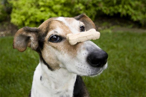 escolher a melhor ração para cachorros