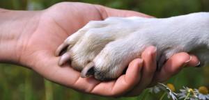 Manual completo para fidelização de clientes do pet shop