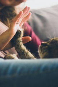 [PALESTRA] Funcionários e Pet Shops: como eles impactam seu negócio