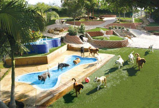 hotel para cachorros e gatos