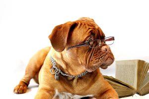 Insumos para Pet Shops: o que são e como controlar