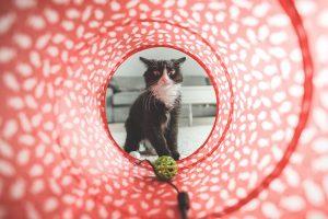 KPI's para Pet Shops: indicadores chave de desempenho