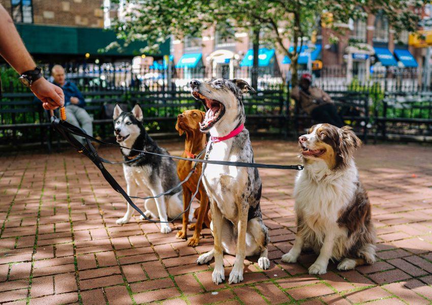 Como inovar em serviços para pet shop
