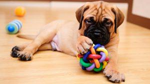 Produtos mais vendidos: conheça os preferidos em pet shops