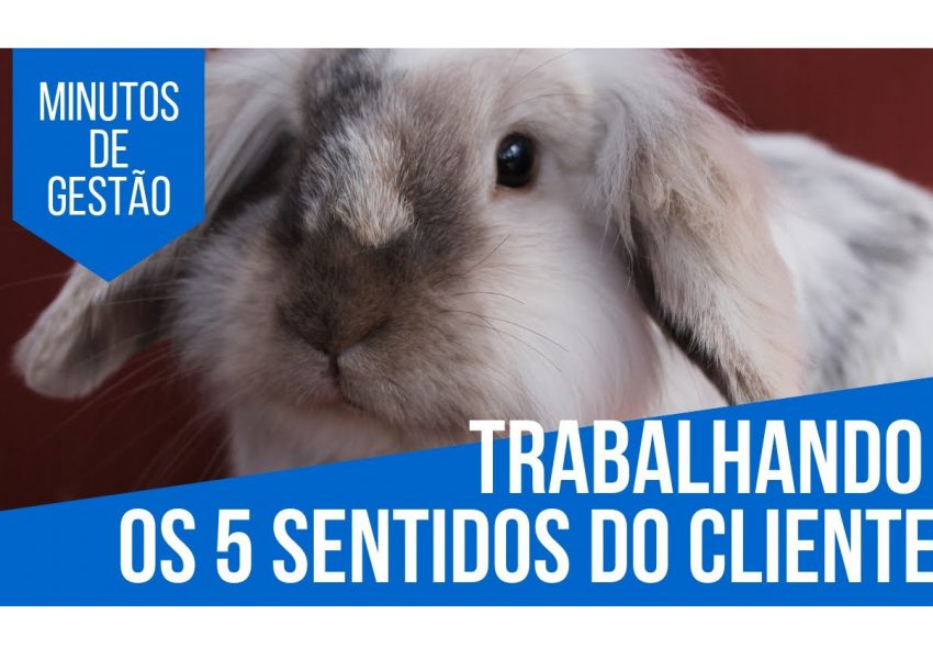 Sentidos do cliente pet shop