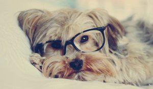 Emissão de NFC-e em pet shop: o que eu preciso saber