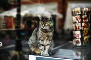 [PALESTRA] Organização da Pet Shop: das prateleiras à experiência do cliente