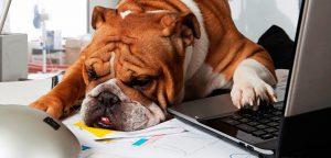 Pilares de gestão: conheça os fundamentais para pet shops