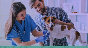 Entenda como a falta da análise de custos em relação ao faturamento pode prejudicar sua clínica veterinária!