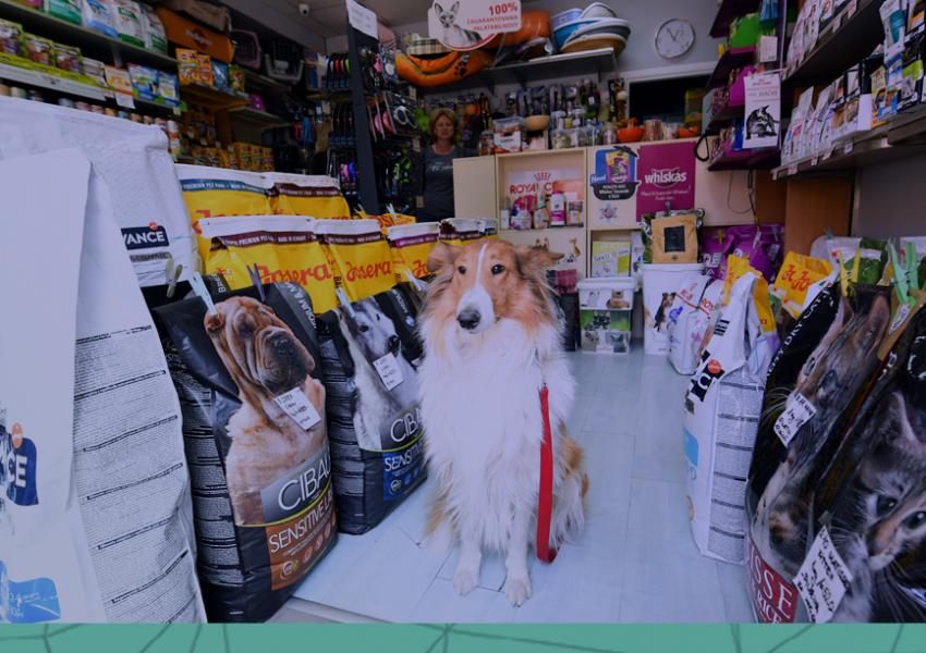 Descubra quais critérios utilizar para fechar boas parcerias com fornecedores do mercado pet!