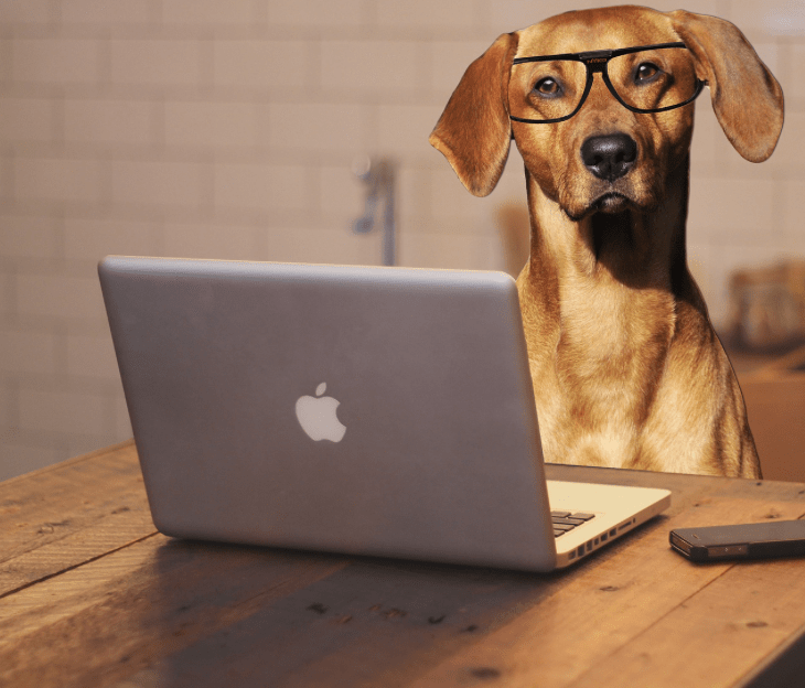 melhor software para pet shop