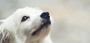 Pet Shop sustentável: como reduzir custos e gerar uma imagem positiva
