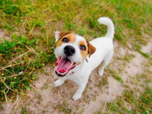 Mercado de Pet shops: como se destacar e começar bem 2020