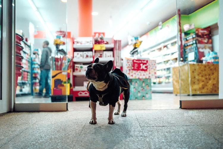 Quero abrir pet shop ou clínica veterinária