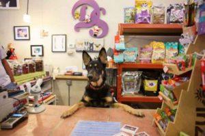 Pet Shop Control: dúvidas frequentes na hora de assinar