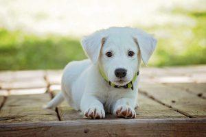Dados fiscais: o que é CFOP e como utilizá-lo em sua pet shop?