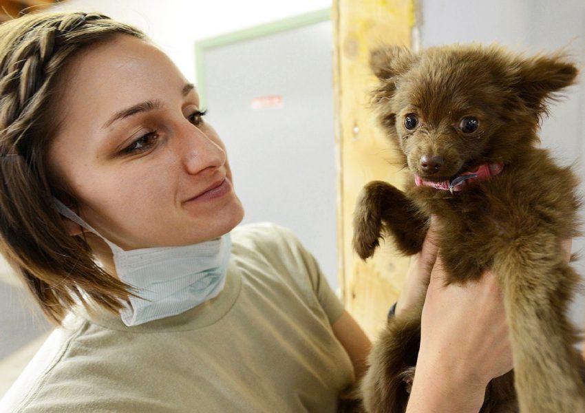 empreender na medicina veterinária