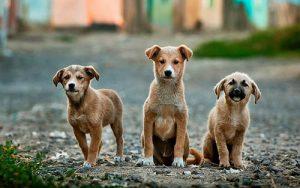 População Pet: porque é importante saber mais sobre o mercado em que pretendo atuar