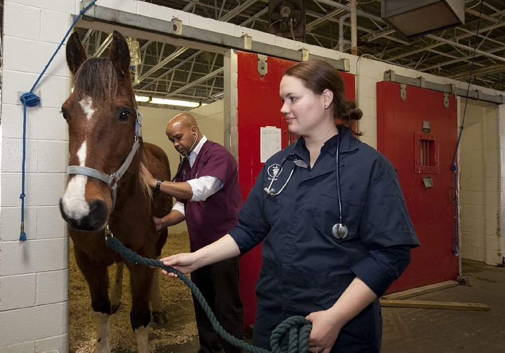 anestesia inalatoria pet veterinario