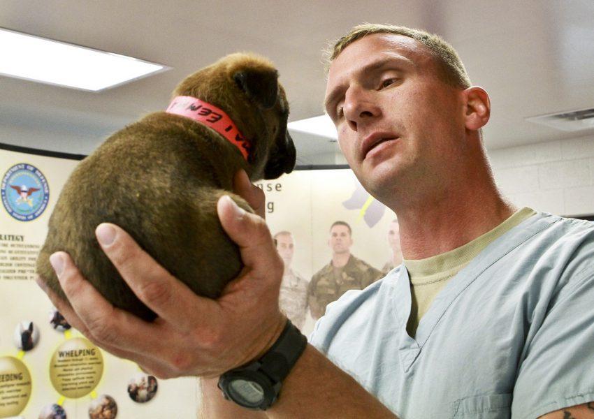 médico veterinário anestesiologista