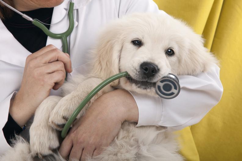 Atendimento veterinário 24 horas: o que é preciso saber